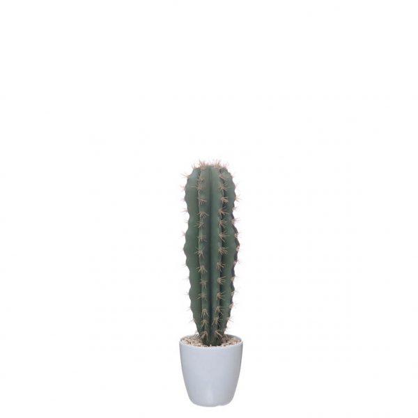Planta Artificial - Cato