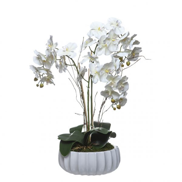Orquídea 3 Caules Taça Esmeralda - 23113