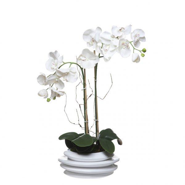 Orquídea 2 Caules Concertina - 23101