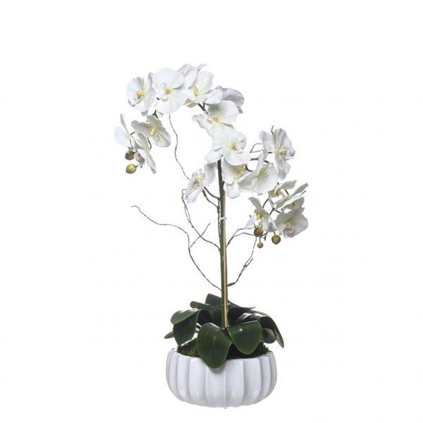 Orquídea 2 Caules Taça Esmeralda - 23112