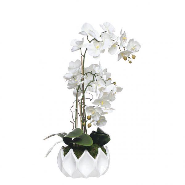 Orquídea 2 Caules em Taça Aranha - 23123